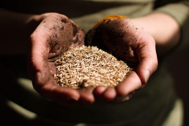 Valori-nutrizionali-differenze-tra-semi-di-lino-dorati-e-scuri