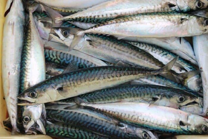 Sgombro-i-pesci-ricchi-di-omega-3